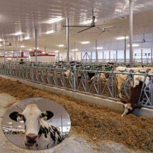 Agriculture fans